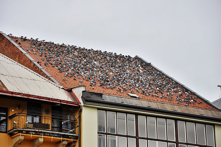 A2B Pest Control are able to install spikes to deter birds from roofs in Crouch End.