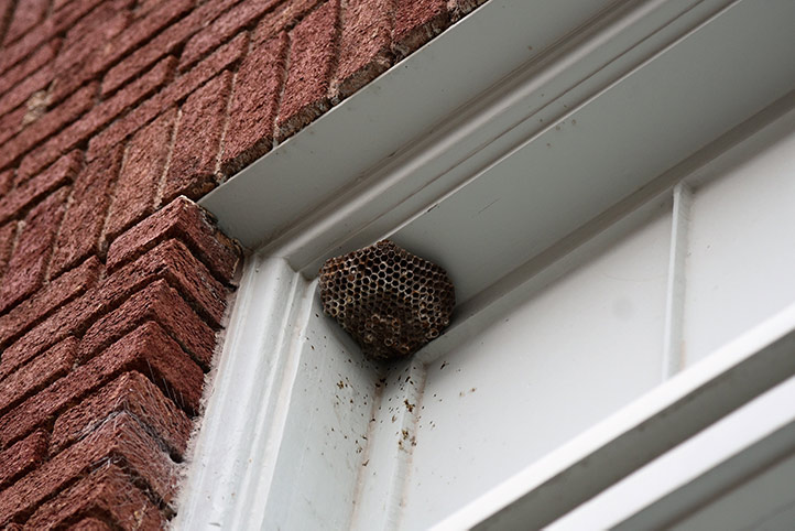 We provide a wasp nest removal service for domestic and commercial properties in Crouch End.